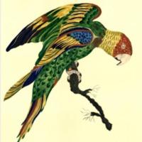 pating bird1.tiff